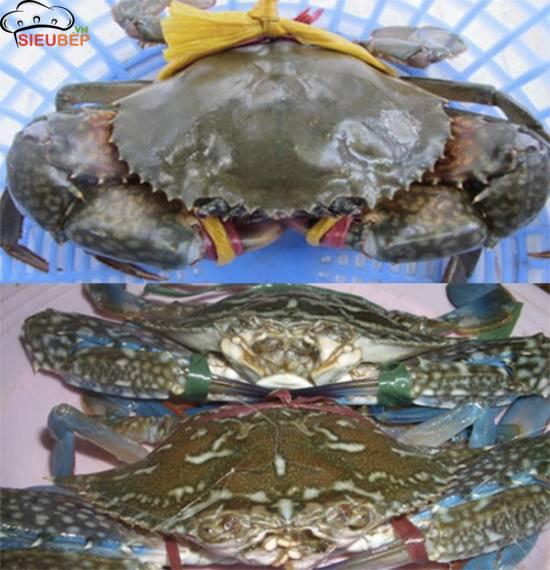 ghe-xao-chua-ngot-cach-nau-banh-canh-cua-ghe-ngon-kho-cuong-chuan-vi-mien-nam-14184-104332